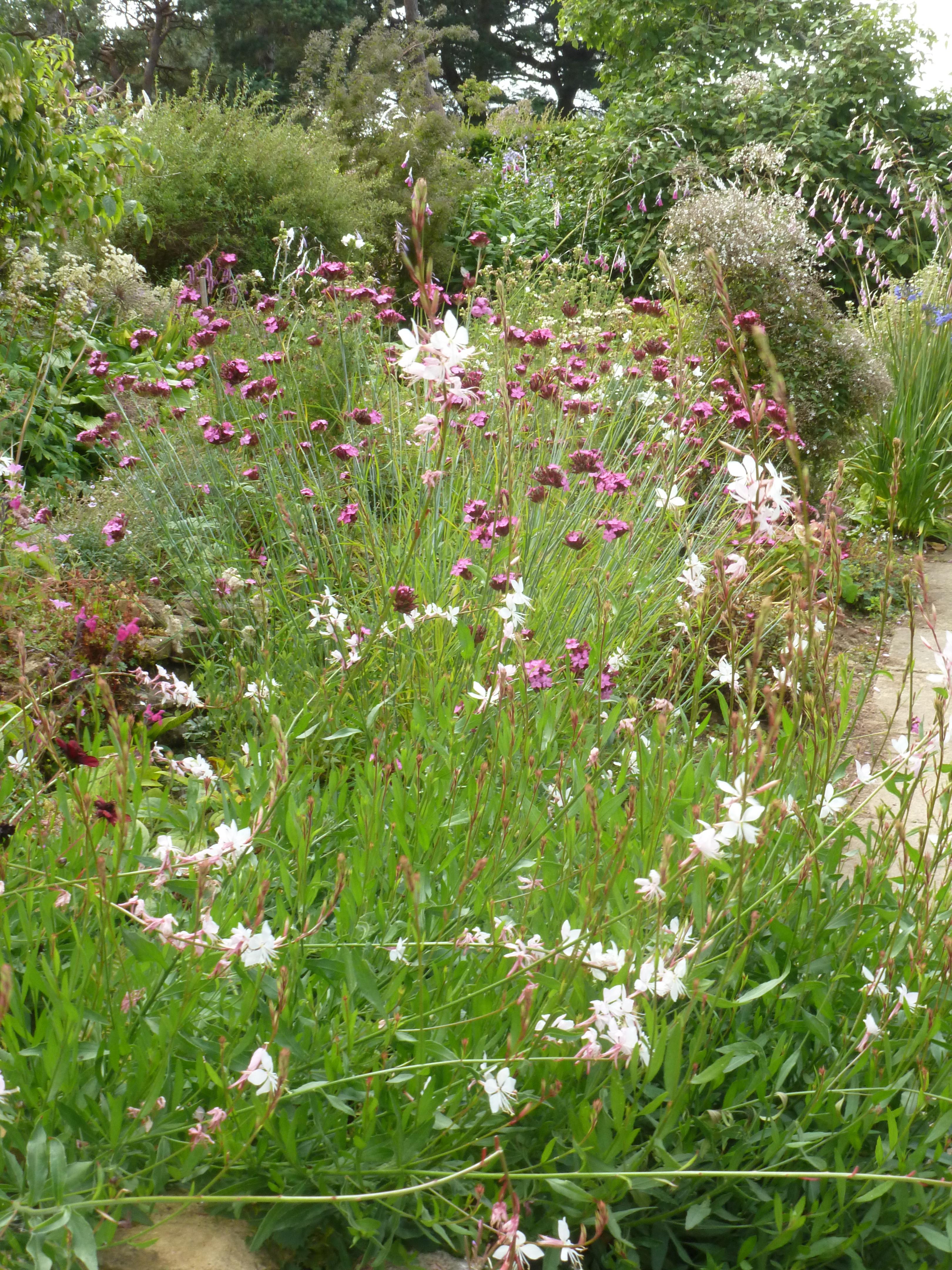 Ursula's Cambridge Garden