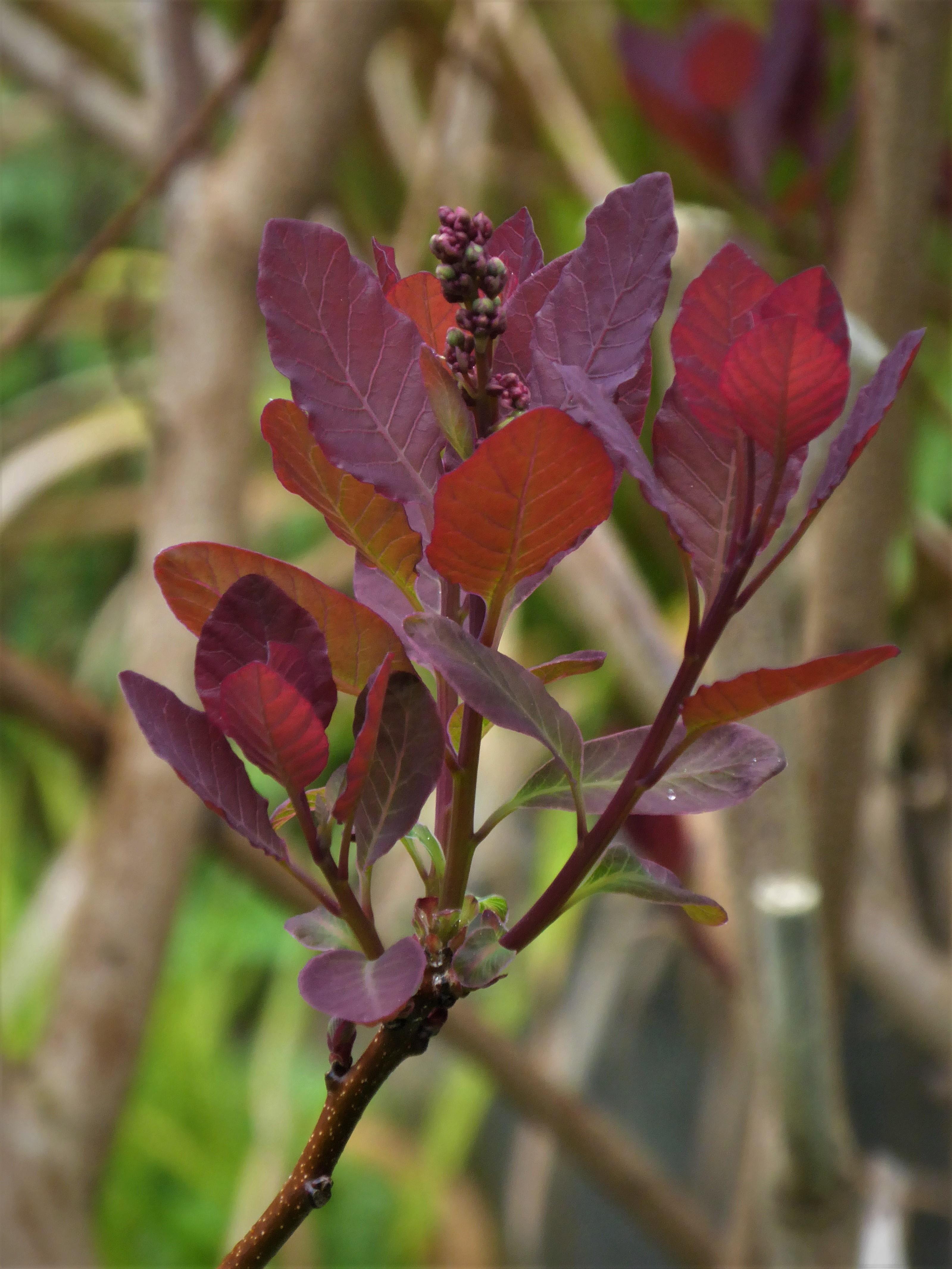 Ursula\'s Cambridge Garden | Professional gardener and plantswoman ...
